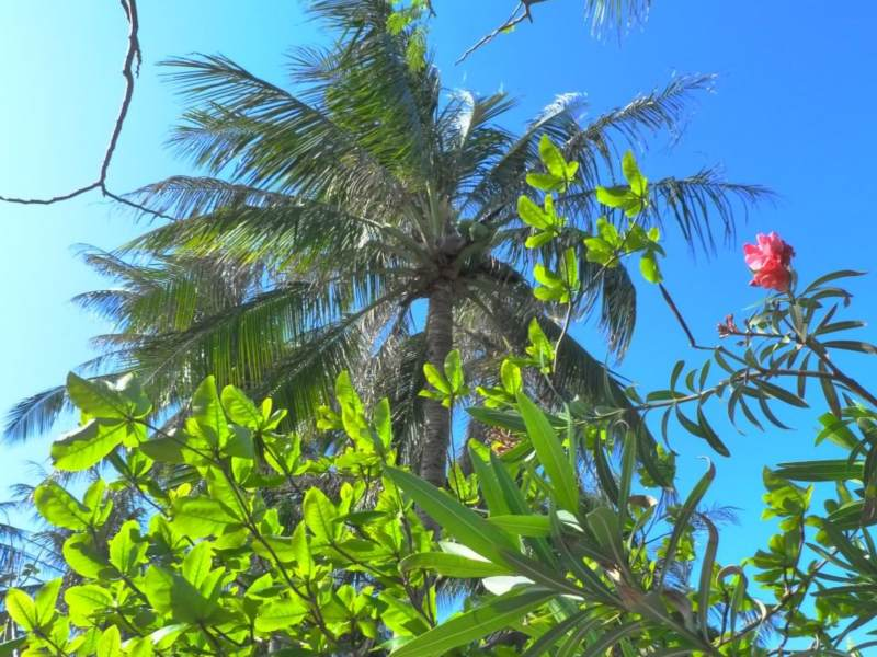 Palm tree with green leaves