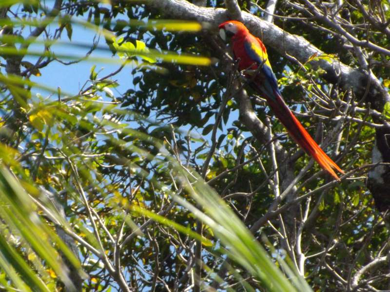 Colourful bird in trees