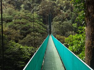 Long bridge walkway in jungle