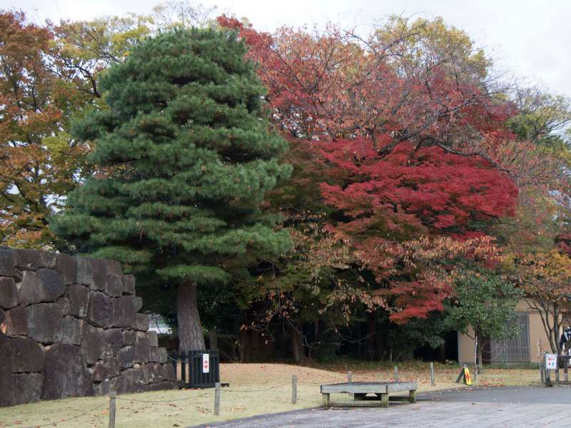Colourful autumn trees in park