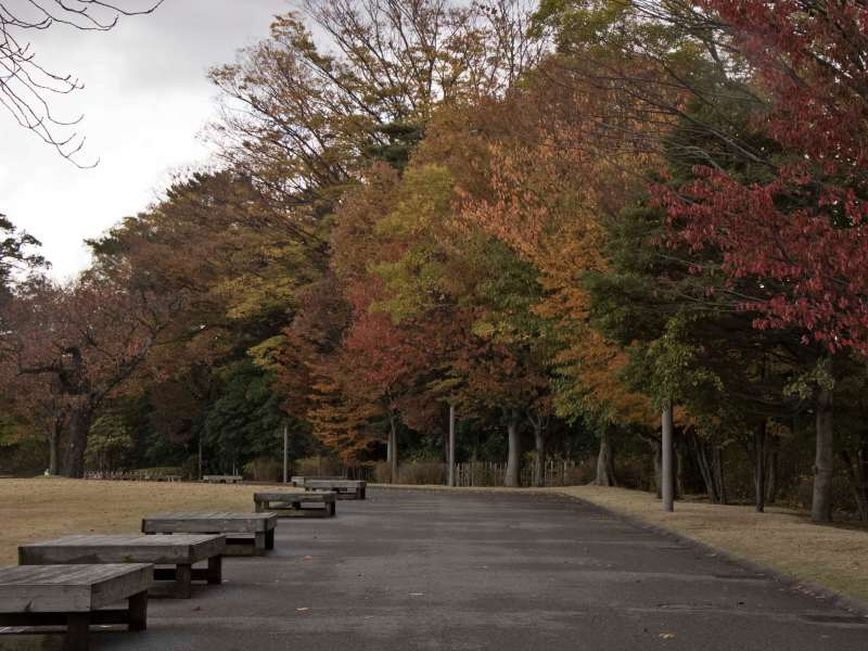 Row of autumn trees in park