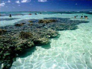 Maragogi-beach-coral-blue-sea