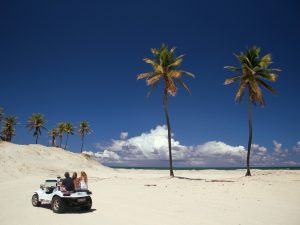 brazil-mangue-palm-tree-car