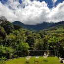 Balcony view of green forests