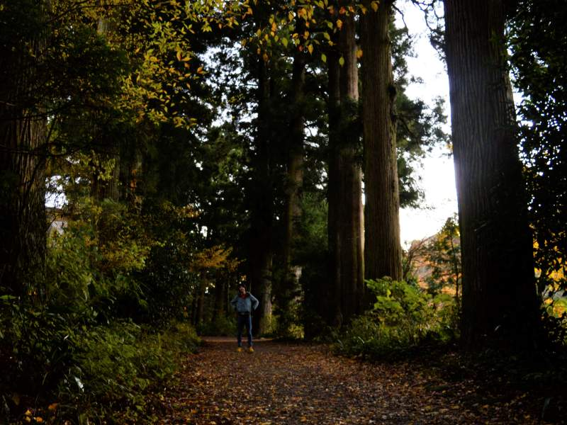 Woodlands with tall trees and man standing in the middle