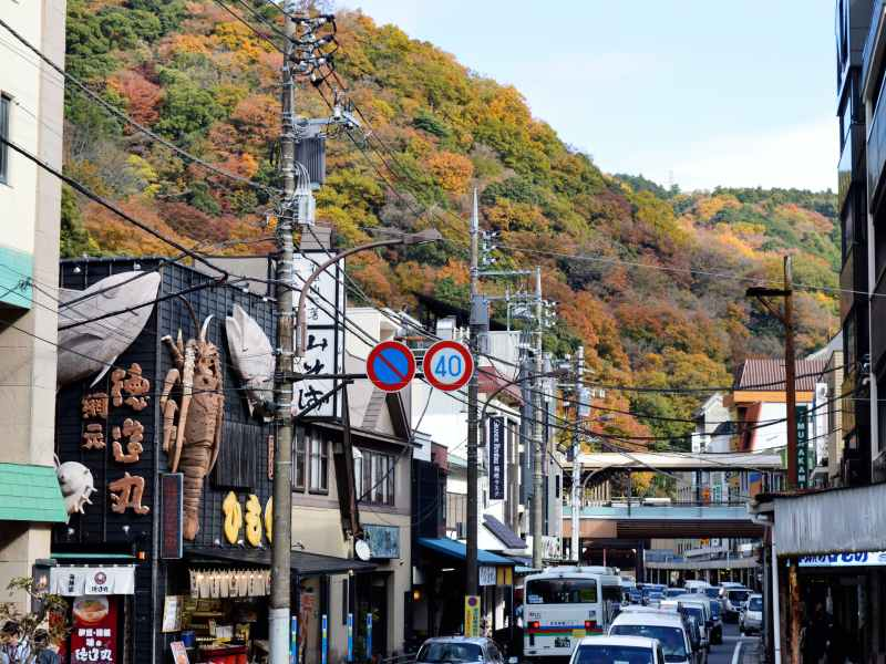 Town with autumn leaves, buildings and cars