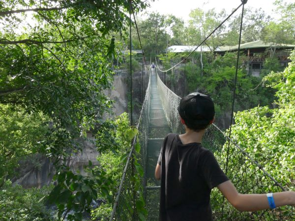 Boy walking across cloud forest bridge