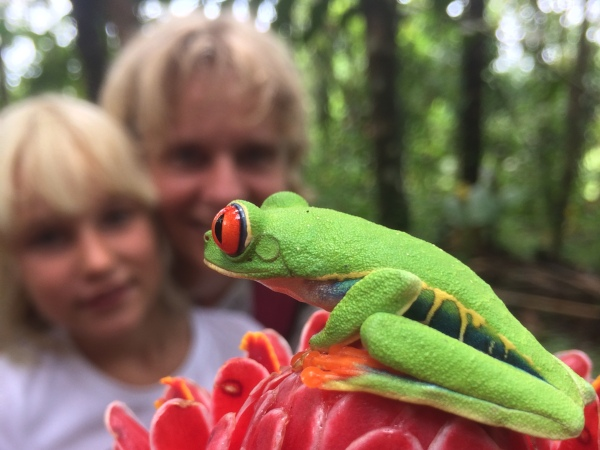 Red Eyed Tree Frog with Family in backgroubd