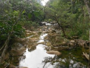 stream in phong nha national park