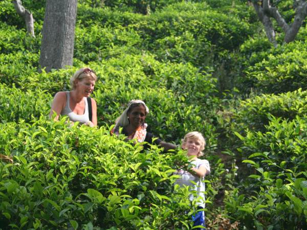 Family through tea plantations