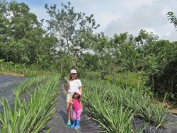 Young children in a pineapple field