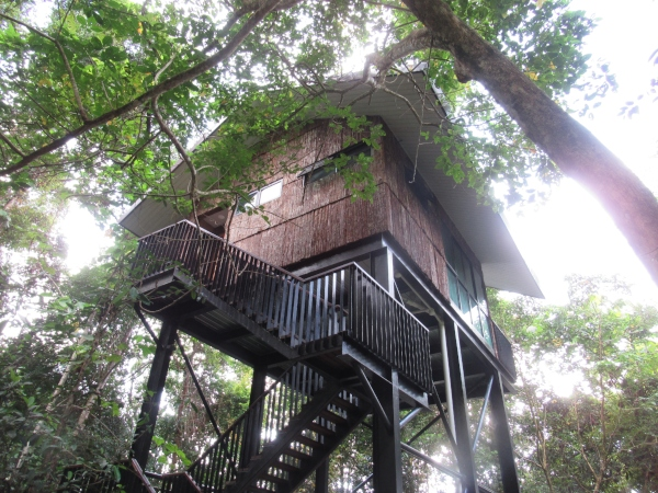 tree house up in the tall green tree