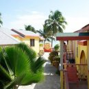 Our hotel in Caye Caulker Palm Tree