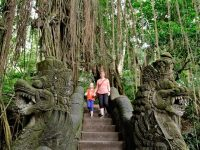 Forest with tiger temple