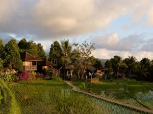 Cottages with rice fields outside