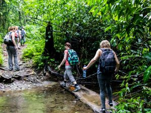 Journey through the Jungles of Corcovado