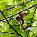 baby monkey in tree tops