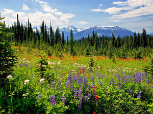 Flowers of all different colours in a meadow