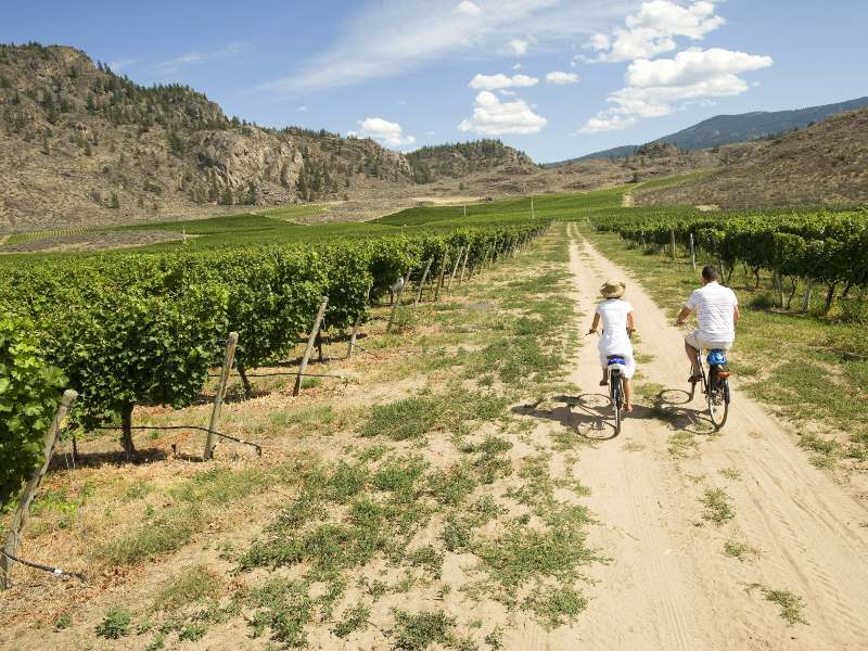 people cycling vineyards in canada