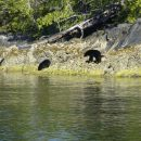 bears sitting in rocks