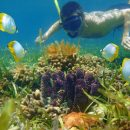 Man in snorkel underwater with tropical fish in a coral reef
