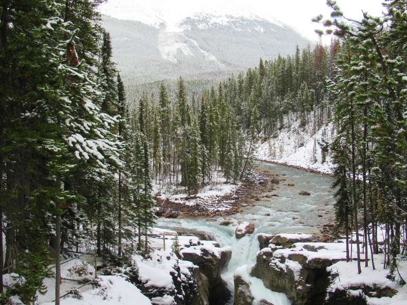 snowy forest and river in icefield parkway, canada