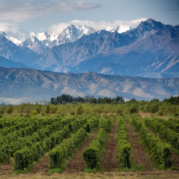 vineyards and mountains in mendoza