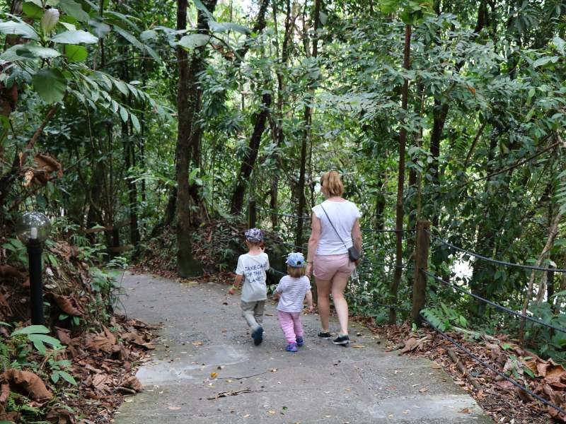 hazel and her children walking through the rainforest