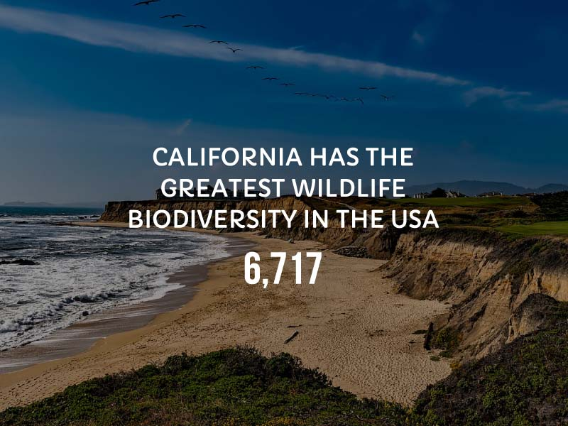 Graphic showing California has the greatest wildlife biodiversity