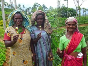Sri-Lanka-tea-pickers-Nuwara-Eliya