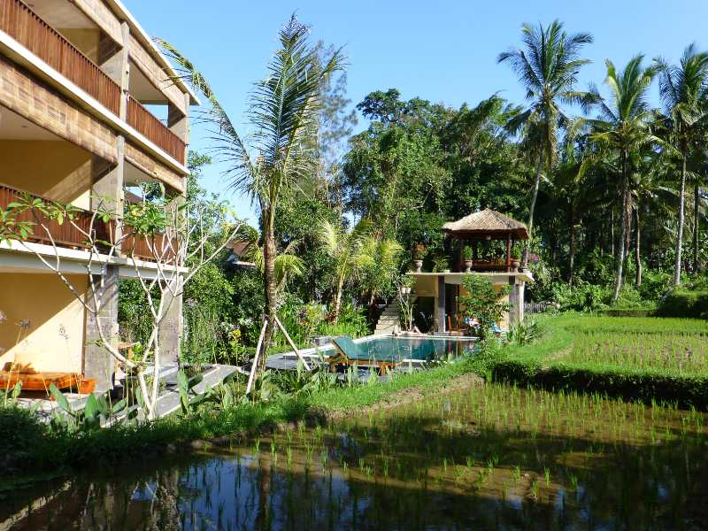Bali accommodation in rice fields with pool