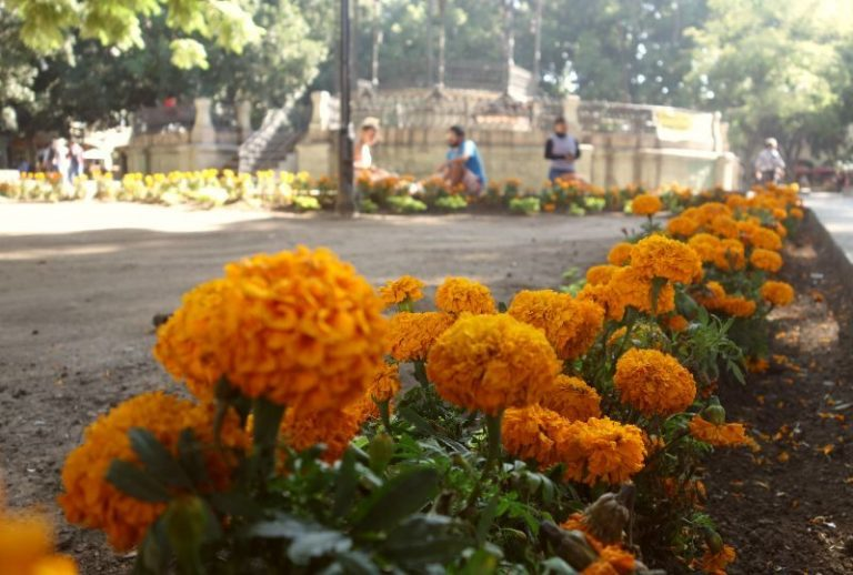 orange marigold flowers lining the street