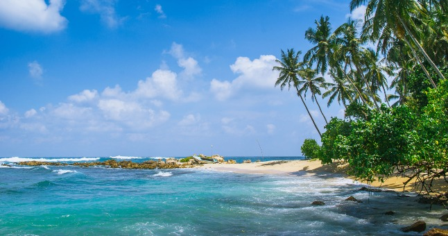 beach in sri lanka with palm trees