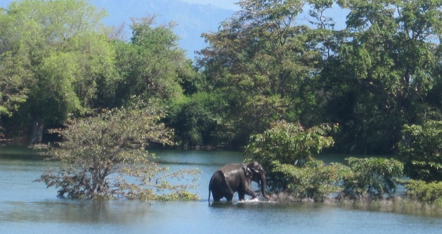 elephants in water surrounded by trees