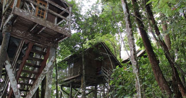 Wooden treehouse in jungle