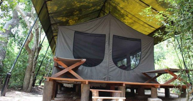 treehouse tent