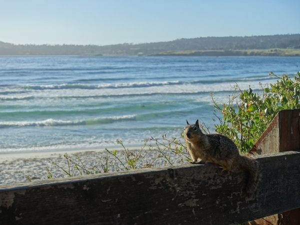 squirrel on fence by the sea