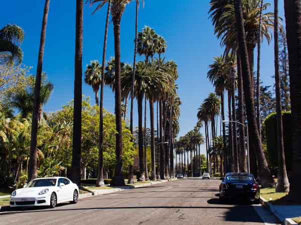 LA Road with palm trees and smart cars