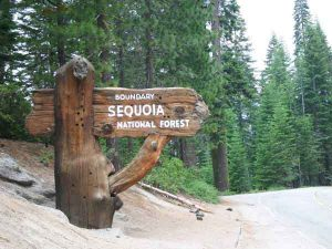 Sign reading Sequoia National Forest