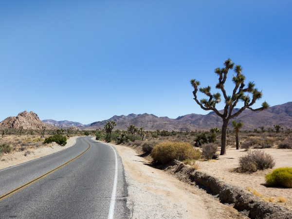 Road through the Joshua Tree National Park, USA