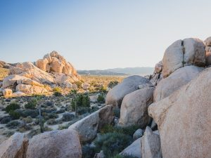 Rock formations at the Joshua Tree National Park, USA