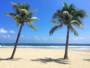 empty beach with palm trees
