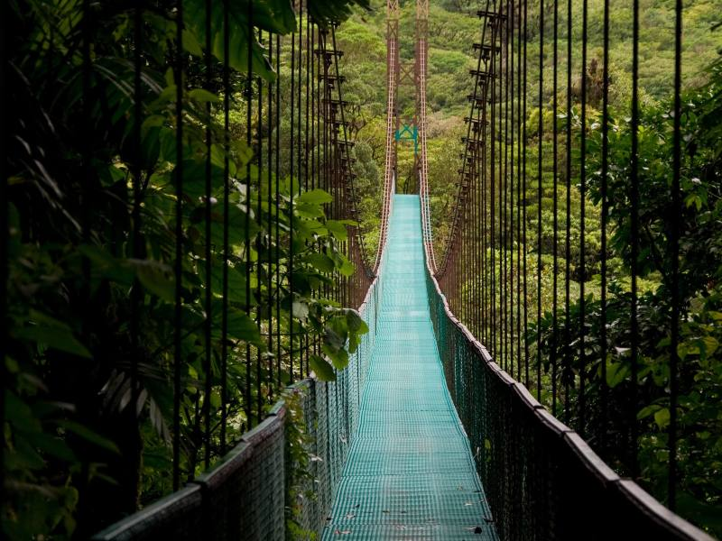 canopy bridge in costa rica