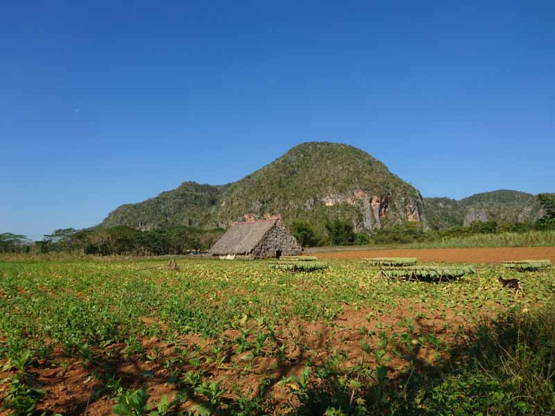 countryside view of vinales