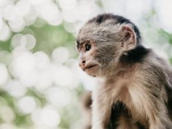 Monket in the Ecuadorian Amazon - by Vince Fleming