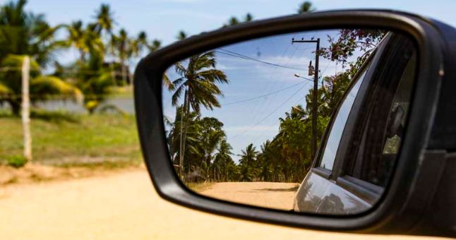 wing mirror view of palm trees