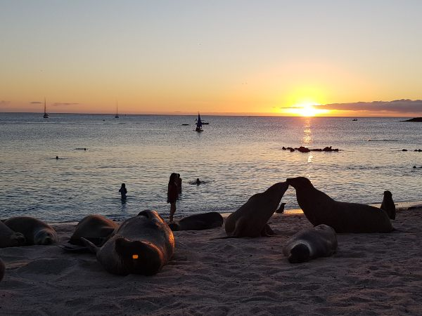 sea lions on the beach at sunset, galapagos