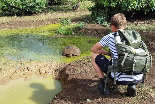 Man watching giant tortoise in the galapagos