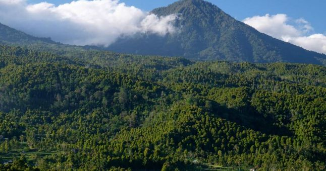 volcano peak with green trees in front
