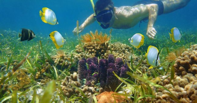 man underwater snorkelling with coral